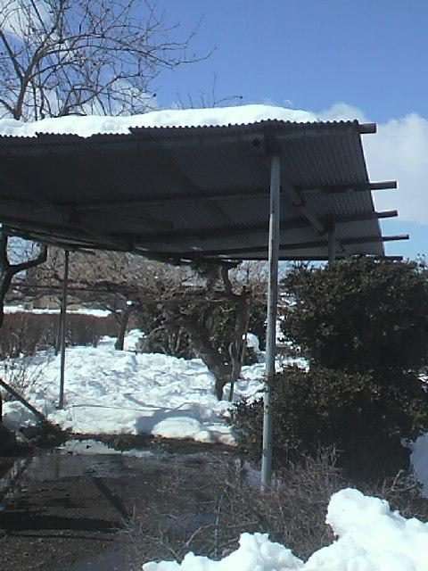 大雪20140216・11時2.jpg