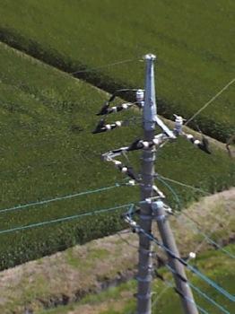 タワーから見下す電柱.jpg